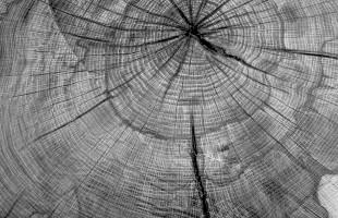 Oak stump in the woods